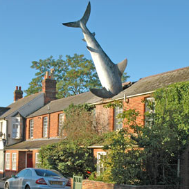 sharkhouse